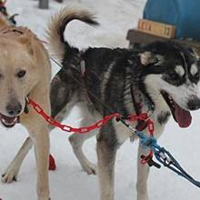 Photo of Dog Sledding & Ice Caves of Northern Michigan (March)