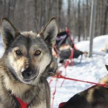 Photo of Dog Sledding and the Ice Caves of Michigan's Upper Peninsula