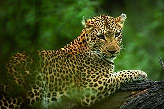 Photo of Tanzania Wildlife Safari
