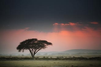 Photo of Best of Kenya ~ A Migration Safari